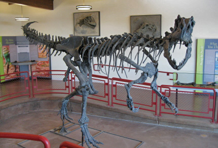 Allosaur displayed at the Cleveland-Lyoyd Dinosaur Quarry Visitor Center