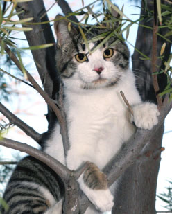 Picture of Cat up in a Tree