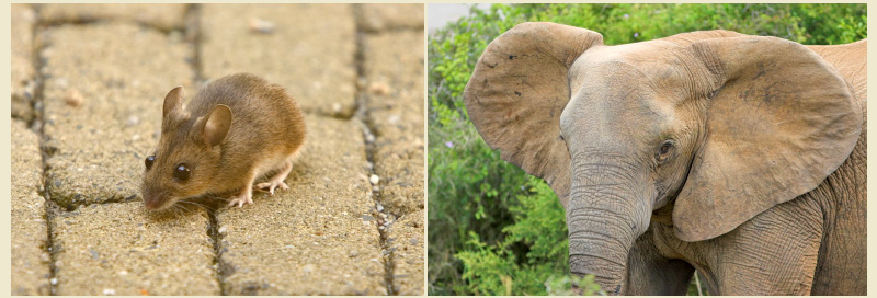 Picture of elephant and mouse