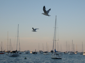 Flying seagulls at the harbor